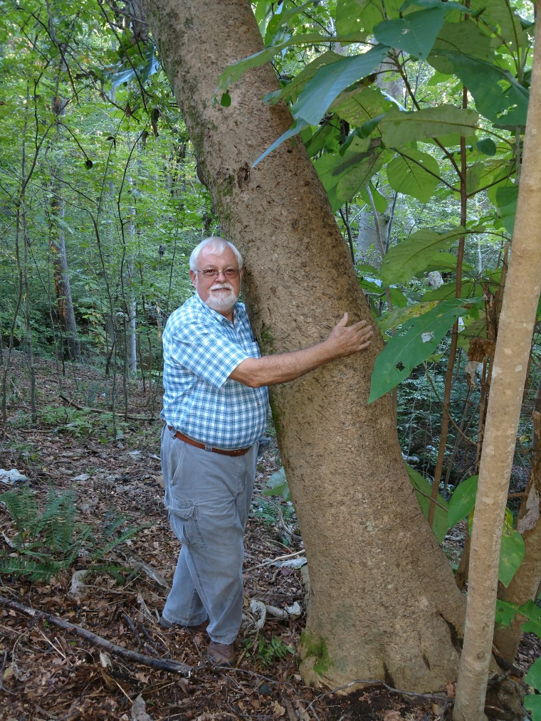 Larry Magnolia macrophylla Best IMG_20170907_180951570