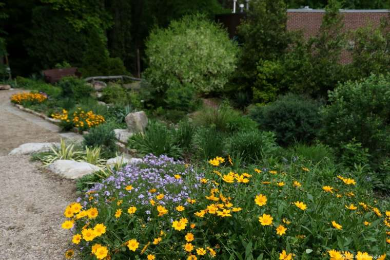 Mellichamp Native Terrace Coreopsis and Phlox