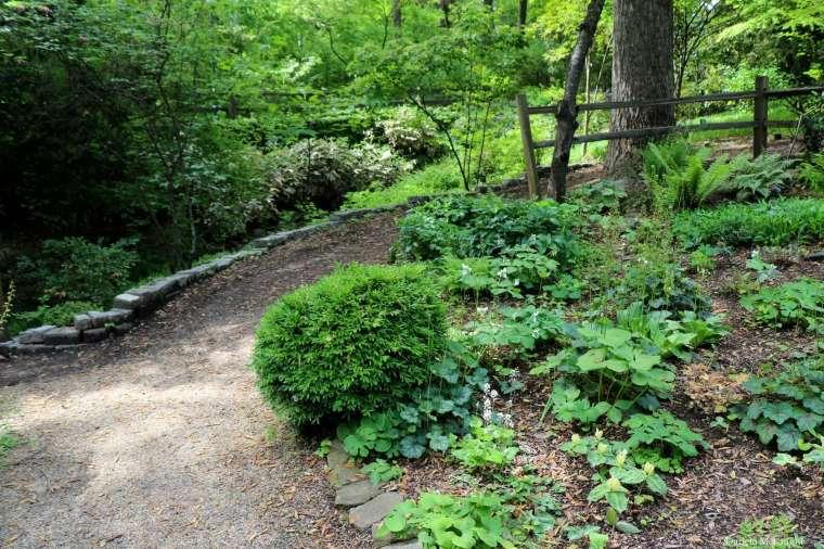 Wildflower bed Susie Harwood Garden